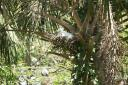 St. Augustine Alligator Farm XI