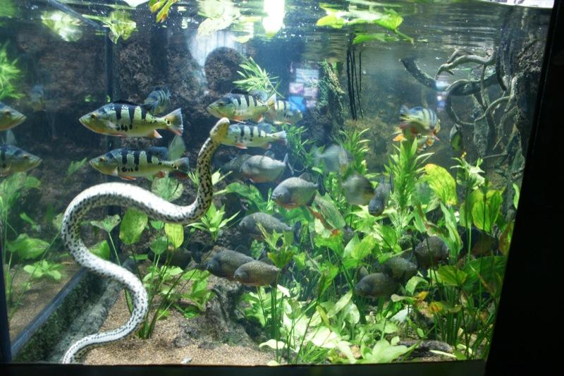 Wasserschlangen I Junglekey De Bilder