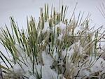 Winter Storm 2011
