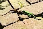 Cypress Gardens 2011 XXXXI