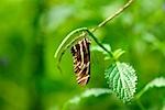 Cypress Gardens 2011 XXXIII