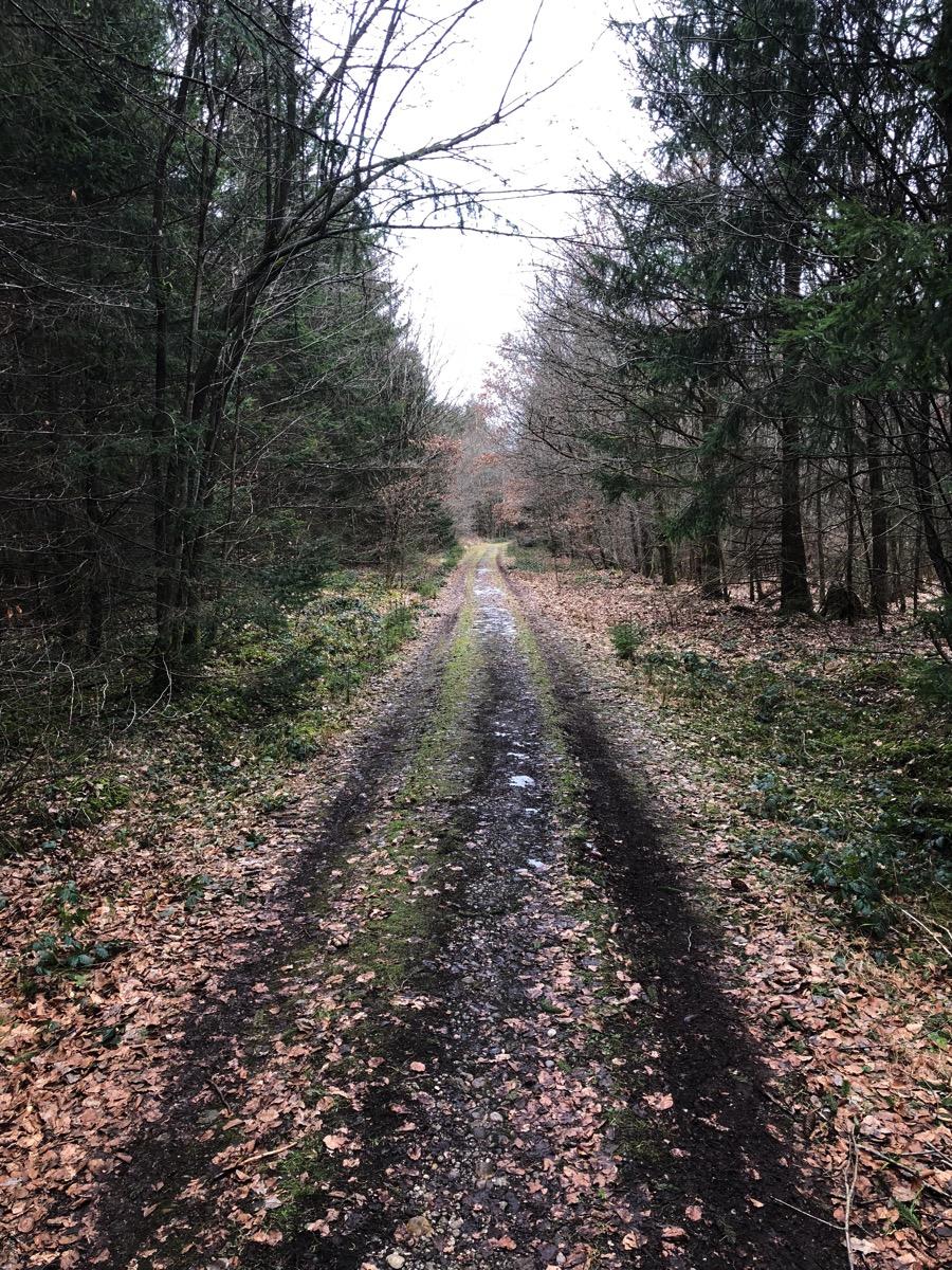 Trail Beautiful